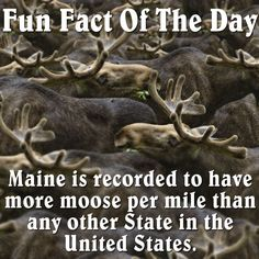 Maine Fact of the Day