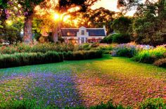 Vergelegen Estate in Somerset West, South Africa. Cape Town Tourism, We Heart It, South African Wine, Cape Dutch, Somerset West, Beautiful Places, Simply Beautiful, Beautiful Scenery, Beautiful Flowers