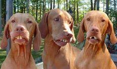 Hillbilly Bird Dogs