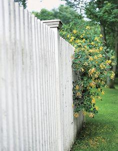 Whitewash our backyard fence?