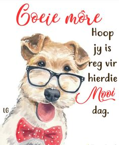 G Morning, Good Morning Wishes, Good Morning Quotes, Animal Pictures, Cute Pictures, Lekker Dag, Evening Greetings, Evening Quotes, Afrikaanse Quotes