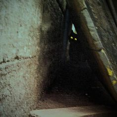 Kenichi Kamio - Cat's eye from Today's piano piece May.24,2014