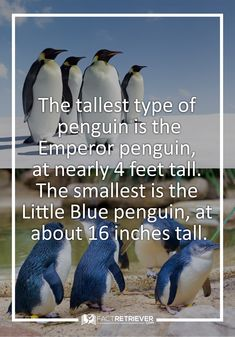 They're cute at any size!