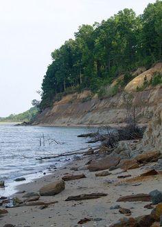 Calvert Cliffs Beach. Chesapeake Bay, MD; great place to hunt for shark teeth fossils