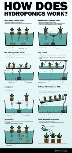 Aquaponics System - How does hydroponics work Break-Through Organic Gardening Secret Grows You Up To 10 Times The Plants, In Half The Time, With Healthier Plants, While the Fish Do All the Work. Hydroponic Farming, Hydroponic Growing, Hydroponics System, Aquaponics Diy, Indoor Hydroponic Gardening, Hydroponics Store, Indoor Farming, Organic Hydroponics, Vertical Hydroponics