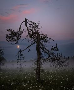 by Asko Kuittinen Finland Eye For Beauty, Evergreen Trees, Summer Landscape, Sense Of Place, Stars At Night, Moon Art, The Great Outdoors, Wonders Of The World, Mists