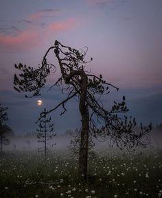 by Asko Kuittinen Finland