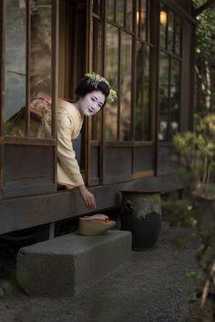 Geisha Japan, Geisha Art, Japanese Geisha, Japanese Kimono, Tea Japan, Memoirs Of A Geisha, Turning Japanese, Nihon, Japan Fashion