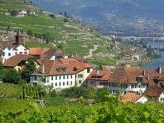 Le vignoble du côté de Vevey (Suisse)