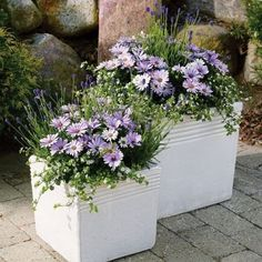How to beautify our homes with perfect creations in pots beautify creations homes perfect Pots is part of Garden containers - Container Flowers, Flower Planters, Container Plants, Garden Planters, Container Gardening, Patio Plants, Potted Plants, Flower Boxes, Flower Ideas