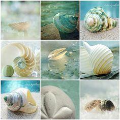 Beautiful Beach Treasures - color inspiration