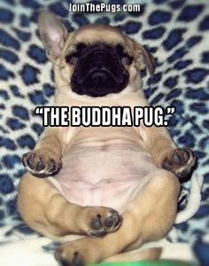 Join The Pugs! #toocute #adorable #peace Four Corners Direct, Inc. selling innovative products directly to our customers! www.fourcorners.com