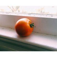 #Tomato.  #summer #garden #globetomato #growyourfood #growsomething #victorygarden by cupcakerehabdotcom