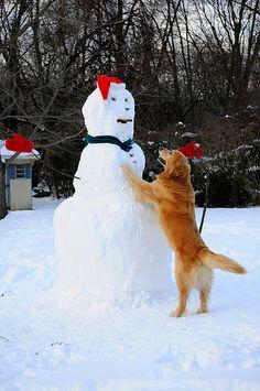 HUGS snowman, golden retriever!!