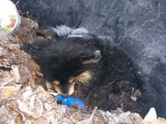 Frost covered young dog dies after being thrown away in the trash
