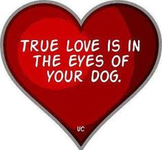 True Love is  in the eyes of your dog. ♥♥♥