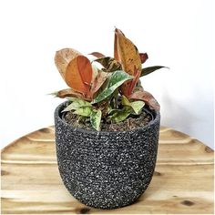 Innovation in agriculture and gardening creating indoor jungle in small spaces with sustainable and zero waste hydroponics systems. Jungle Warriors, Sansevieria Trifasciata, Ficus Elastica, Hydroponics System, Plant Decor, Agriculture, Indoor Plants, House Plants, Planter Pots