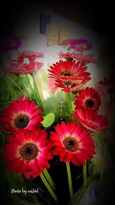 Gerbera, Music Notes, Beautiful Flowers, Natural Beauty, Iphone Wallpaper, Daisy, Gifs, Heaven, Roses