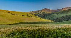 """Wind Wolves:  Tall Grass by Wayne Wong on Capture Kern County // This is a companion to the previous post, Lush and Lavish Valley High. The scene was so beautiful that  I could not take it all in at once...it wasn't until I edited it that I saw the scope and depth of the land.  We are about to go up a hill to the next level to the left, that shot was posted as """"Wind Wolves:  Final Approach as Seen Out the Window"""""""