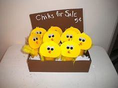 Chicks for sale!
