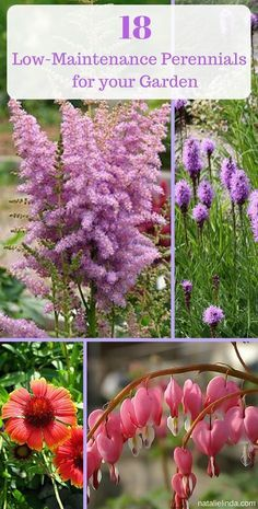 """"""""""" These 18 low maintenance perennials make flower gardening so easy. They're perfe… """""""" These 18 low maintenance perennials make flower gardening so easy. They're perfect for beginners and for beautifying your yard with minimal effort! Low Maintenance Landscaping, Low Maintenance Garden, Landscaping Tips, Landscaping Software, Landscape Maintenance, Garden Landscaping, Inexpensive Landscaping, Luxury Landscaping, Garden Shrubs"""