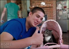 F-you, douchebro. | The Best Cat GIF Post In The History Of Cat GIFs