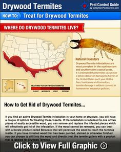 Drywood Termite Treatment - How To Get Rid of Drywood Termites