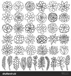 Hand drawn line succulent plant isolated on white background. Vector illustratio… Hand drawn line succulent plant isolated on white background. Vector illustration – bu vektörü Shutterstock'ta satın alın ve başka görseller bulun. Doodle Inspiration, Bullet Journal Inspiration, Duvet Inspiration, Planting Succulents, Succulent Plants, Succulents Drawing, Drawing Flowers, Hand Drawn Flowers, Simple Flower Drawing