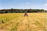 Plantio direto favorece a produção de grãos