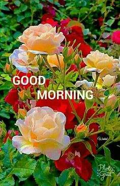 9 Great Pretty Flowers Good Morning Images Ideas That You Good Morning Flowers Pictures, Lovely Good Morning Images, Good Night Flowers, Good Morning Beautiful Flowers, Good Morning Nature, Good Morning Happy Sunday, Good Morning Roses, Good Morning Cards, Good Morning Photos