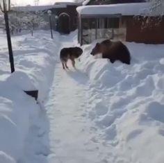 Bear viciously attacks innocent doggo