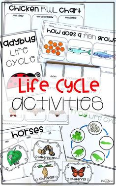 This bundle contains everything you need to motivate students to learn about the life cycle of the ladybug,. Kindergarten Activities, Science Activities, Sequencing Activities, Preschool Science, Science Ideas, Fish Life Cycle, Animals Name List, Cycle For Kids, Butterfly Life Cycle