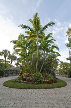 Tropical Palm Tree Landscape | Florida Landscape with Tropical Palm Trees in Sarasota » Landscaping ...