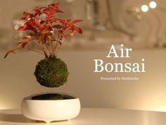 飛行石が入っていそうな空中浮遊する盆栽「Air Bonsai」