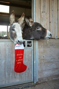Pic by the Donkey Sanctuary in the UK