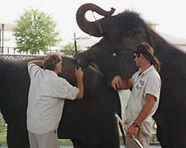 www.peta.org Support PETA and their wonderful work saving circus animals and freeing them from a life of slavery.. DO not support any circus or animal entertainment or you are advocating torture for animals.