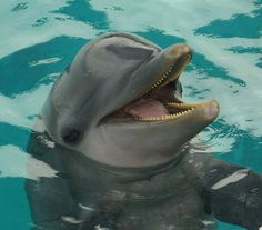 Laughing Dolphin, can't you just hear him? I love how a Dolphin laughs..e