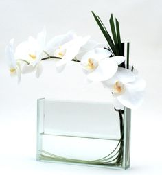Clean Look Orchids - Elegant Phalenopsis Orchid set in a clear rectangle with a touch of grass fringe
