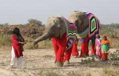En la ciudad de Mathura en la India hay el centro para la protección de los elefantes llamado Wildlide SOS Elepehant Comnversation an...