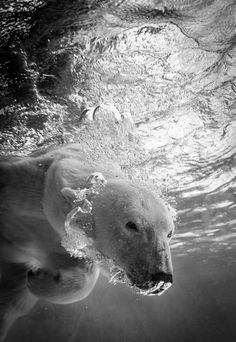 Bear Bubbles Photo by Jennifer MacNeill-Traylor -- National Geographic Your Shot