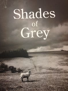 The new Shades of Grey carpet range by Kingsmead Carpets. Ask a local retailer about it!