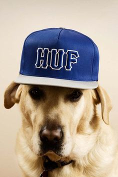 Dogs in Funny hats