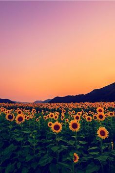 :D Haha... Run through the fields...or at least become a sunflower? Life has its sunrises and sunsets...