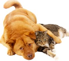 Learn about cats and dogs and other pets. Enjoy wonderful videos, and pictures. Help rescue those who never had or lost their home. It's free! at Freekibble.com,