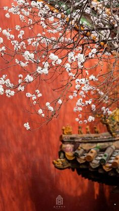 The Forbidden City is embraced by the blossom of spring. ‪#‎Beijing‬