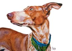 Hey, I found this really awesome Etsy listing at https://www.etsy.com/listing/178602634/podenco-canario-ilias-art-print-size