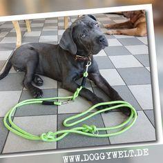 Labrador Retriever, Dogs, Animals, Etsy, Basic Colors, Wish, Linen Fabric, Handmade, Labrador Retrievers