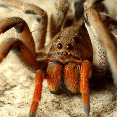 10 Most Poisonous Spiders in the World Yes, yes I am featuring a species of deadly spiders in book two.