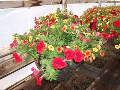 We offer a variety of sizes and styles to meet individual needs and desires. Summer Months, Hanging Baskets, Lush, Photo Galleries, Yard, Meet, Patio, Canning, Plants