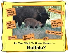 Colorful photographs and amazing facts will capture the attention of your young readers as they develop an understanding of the incredible animal, the bison. This informational unit is filled with literacy activities that can be used during guided reading groups or science.
